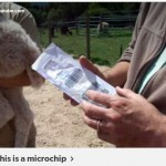 This is a Microchip